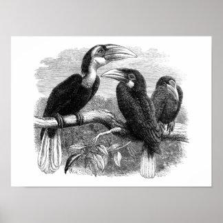 Hornbills 1870 poster