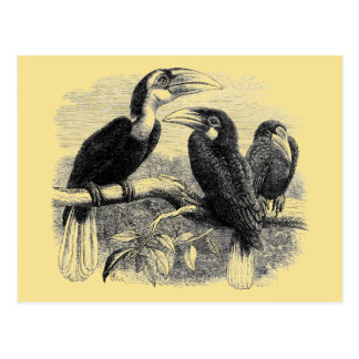 Hornbills Postcard
