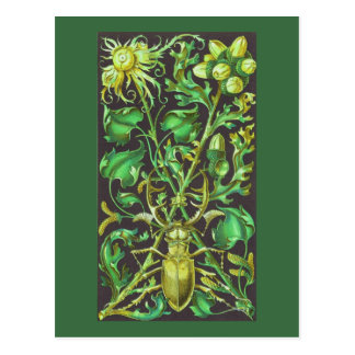 Horned Beetle in Gold and Green Vintage Print Postcard