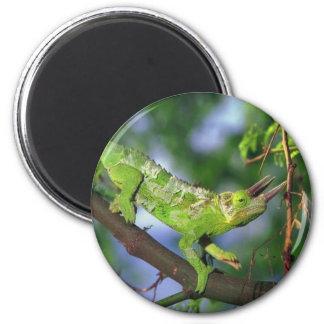 horned chameleon magnet