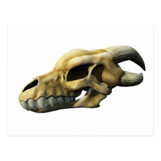 Horned Dragon Skull Postcard