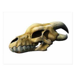 Horned Dragon Skull Postcard