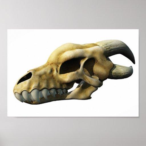 Horned Dragon Skull Posters