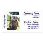 Horned Eland Business Cards