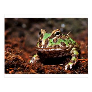 horned frog postcard