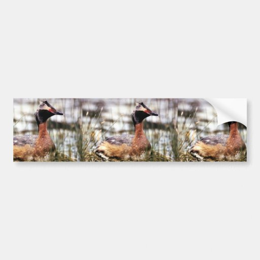 Horned Grebe Bumper Stickers