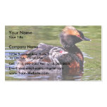 Horned Grebe with Young Business Card Templates