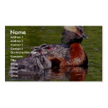 Horned Grebe with Young Business Cards