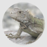 Horned Iguana Sicker Stickers