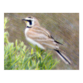 Horned Lark Colored Pencil Drawing Postcard