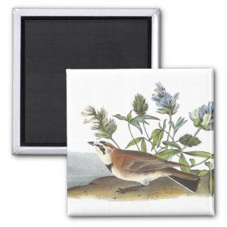Horned Lark, John Audubon Fridge Magnet