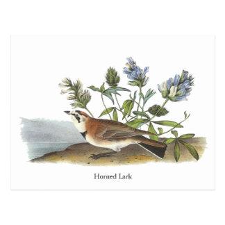 Horned Lark, John Audubon Postcard