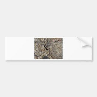 Horned Lizard Bumper Sticker