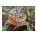 Horned Lizard, Texas Postcard