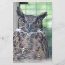 Horned Owl_0327
