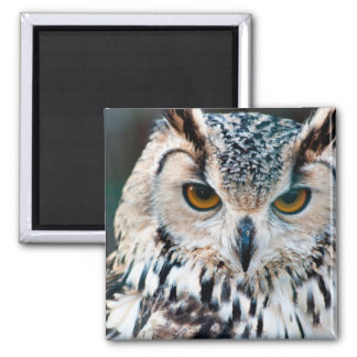 Horned Owl Bird Nature Wildlife Magnet