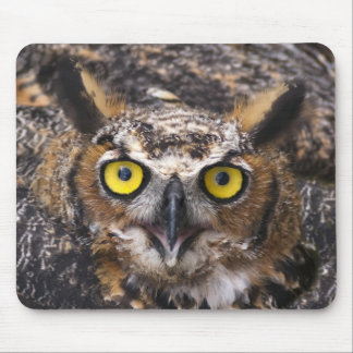 Horned Owl Mouse Pad