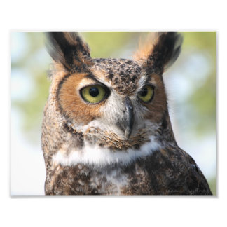 Horned Owl Photo Print