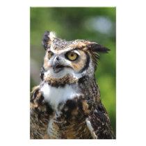 Horned Owl Stationery