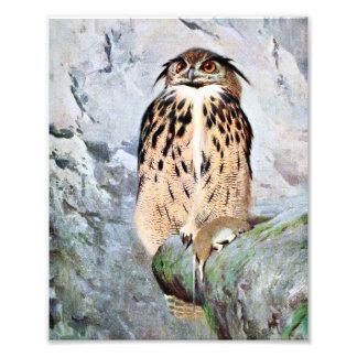 Horned Owl Vintage Illustration Photo Print
