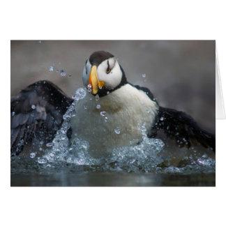 Horned Puffin Bathing - Fratercula corniculata Card