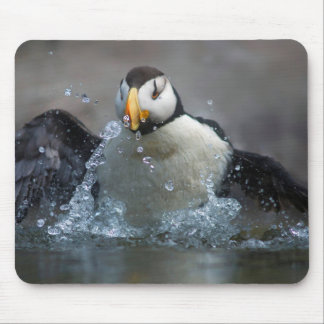 Horned Puffin Bathing - Fratercula corniculata Mouse Pad