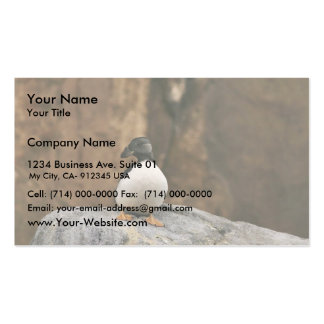Horned Puffin in Winter Plumage Business Card Templates