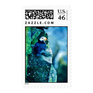Horned Puffin Stamps