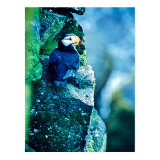 Horned Puffin Post Cards
