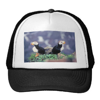 Horned Puffins Mesh Hat
