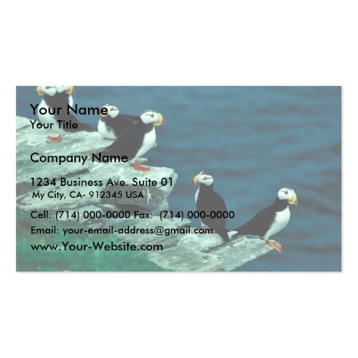 Horned Puffins on Puffin Island Double-Sided Standard Business Cards (Pack Of 100)