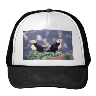 Horned Puffins Trucker Hats