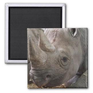 Horned Rhino Magnet  Fridge Magnets