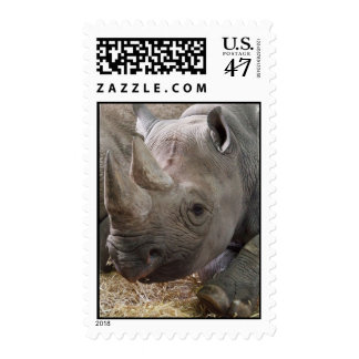 Horned Rhino Postage Stamp
