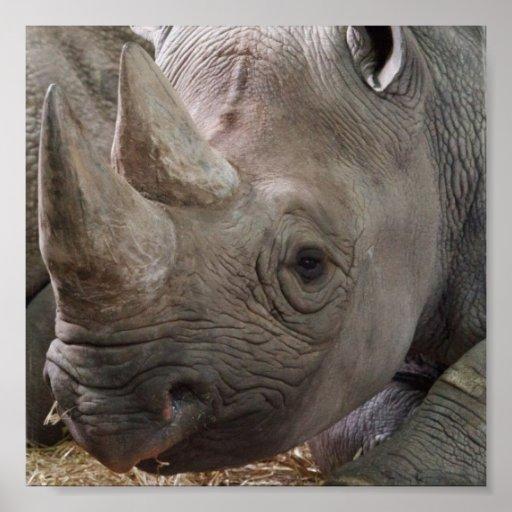 Horned Rhino Poster