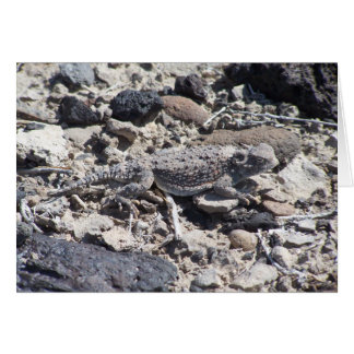 horned toad card