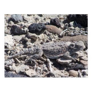 horned toad postcard