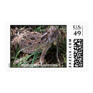 horned toad, stamp