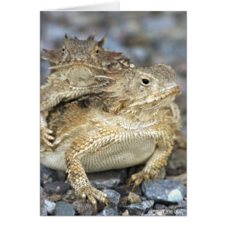 Horned Toads 014 Card
