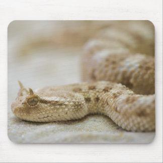 Horned Viper Mousepad