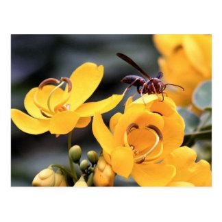 Hornet On Yellow Cassia Flower Postcard