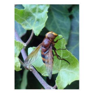 Hornet Postcard