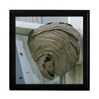 Hornets Nest Gift Box