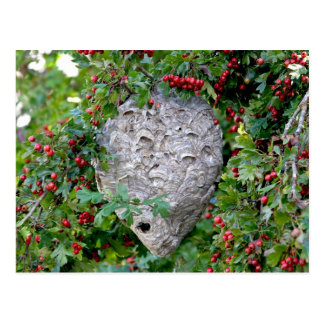 Hornets Nest Photo Postcards