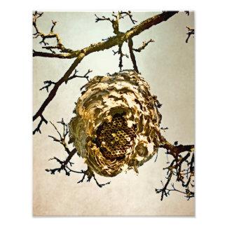 Hornet's Nest Photo Print