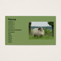 Hornless sheep business card