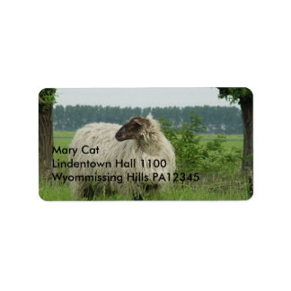 Hornless sheep label