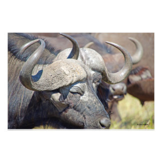 Horns Among the Herd Photograph