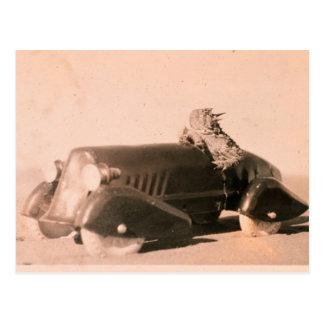 Horny Toad Car Postcard