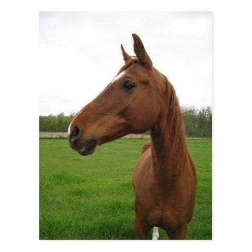 horse2 tarjetas postales